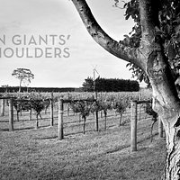On Giants' Shoulders Vineyard, Martinborough