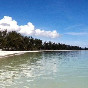 Sebaring Island lined up with coconut and wild pine trees
