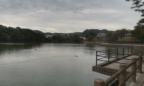 【白水大池公園】遊歩道から見た池、カモが泳いでいました