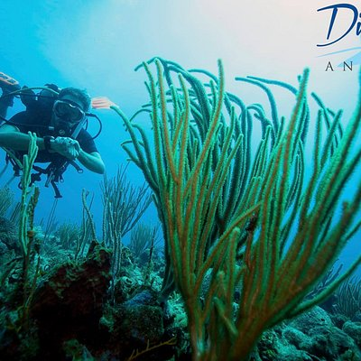 One of our favourite dive sites - 'Red Rock'.