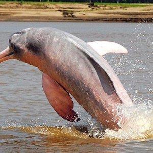 Avistamiento Delfines Rosados