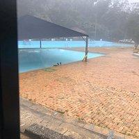 The ducks were enjoying the pool