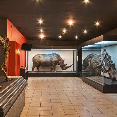 Paleolit - przyroda i sztuka. Wystawa z megafauną plejstoceńską.