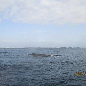 Velryba,bohužel foták nebyl vhodný