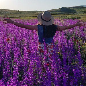 Embracing late spring in August in this alpine flower field among the highest peaks of the Lesser Caucasus mountains.