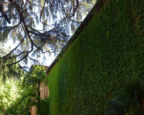 la parete ricoperta di edera