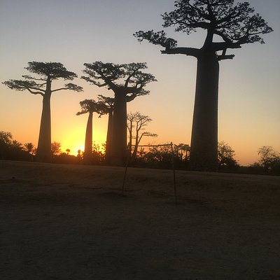 The Baobab avenue in Morondava