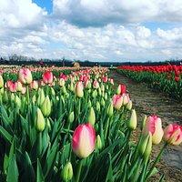 Vieni, visita e raccogli! Vi aspettiamo in Primavera 2019 per la seconda edizione di FiorirAnno! Una spettacolare fioritura vi aspetta! Evento a durata limitata, NON PERDETEVELO!