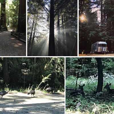 Campground in the Redwoods, with RV sites, tent sites, and cabins.