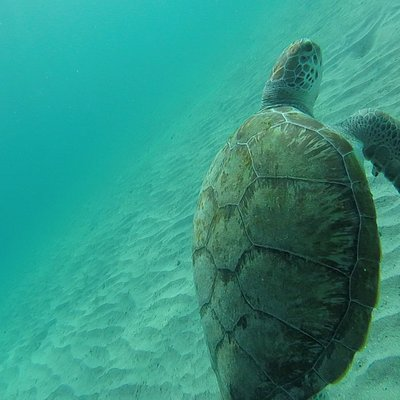 Close encounter turtle