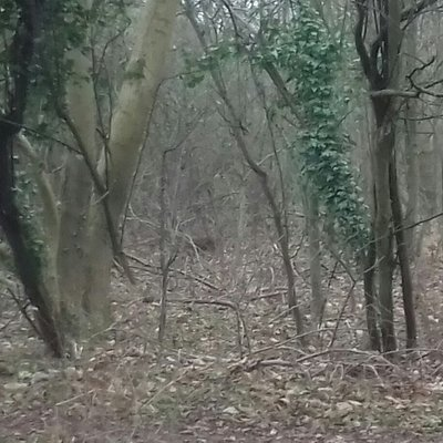 Lovely peaceful walk ( deer pictured)
