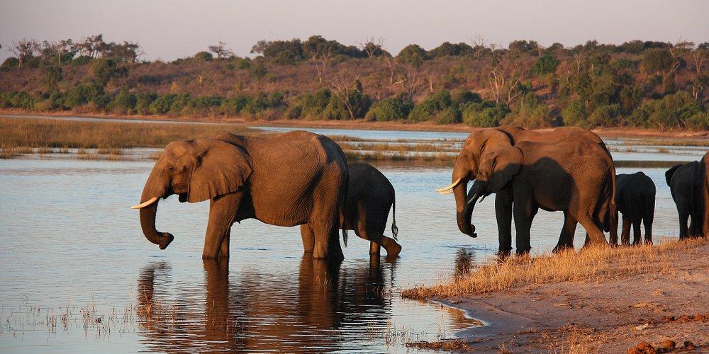 Se desiderate incontrare: natura selvaggia, panorami incredibili ed animali come in un documentario, non dovreste rimandare oltre e organizzare al più presto un Safari in tenda in Botswana. A breve verrà pubblicato un nuovo articolo sul nostro Blog.