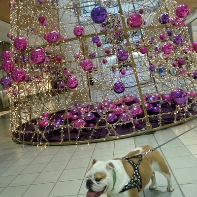 christmas time at the mall