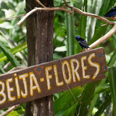 os pássaros que aparecem no lugar!