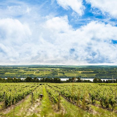 Vineyard vistas abound on the Seneca Lake Wine Trail.