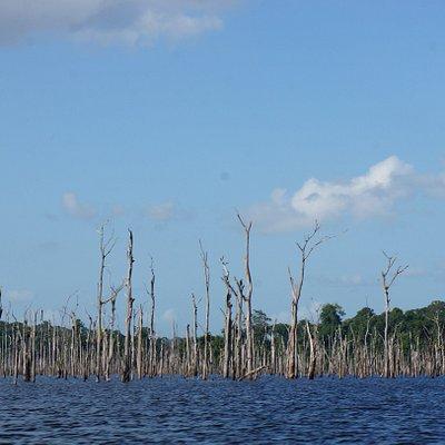 Lac des bois morts (barrage de Petit Saut)