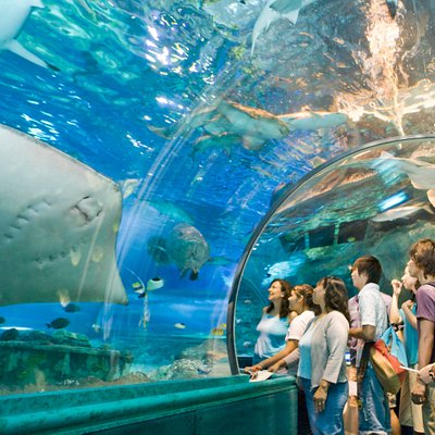 Our Ocean Safari is open daily from 10am-6:30pm (last entrance 6pm)