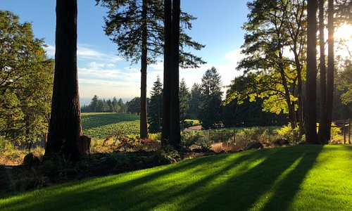View of the vineyard from our West Lawn by the tasting room
