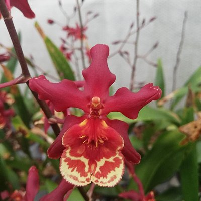 Just some of the gorgeous and exotic varieties available at Eikenhoff Orchid Nursery.