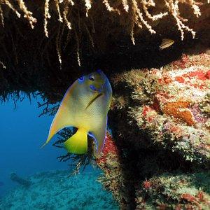 Ecodiving Escola de Mergulho and Resort PADI