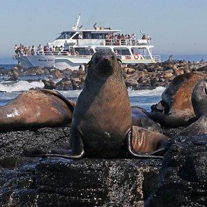 Seal Watching Cruise.