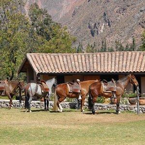 Horses at the Perol Chico ranch