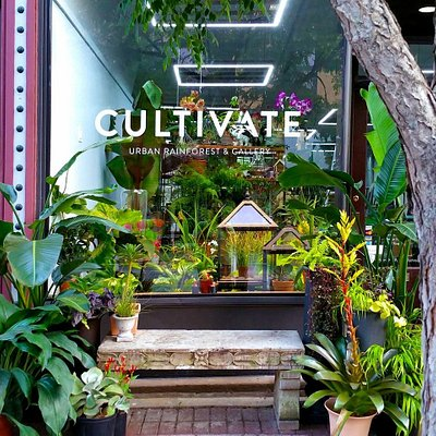 Front window of Cultivate Urban Rainforest & Gallery