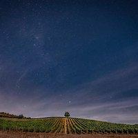 Una vista a los viñedos vecinos al Observatorio y las estrellas que comienzan a aparecer para nuestros visitantes
