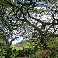 Waimea Arboretum and Botanical Garden