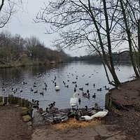 Some of the residents of Charnwood water