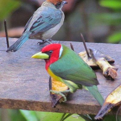 Aves en su ambiente natural