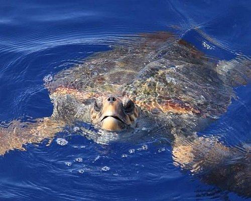 Faro Diving Resort