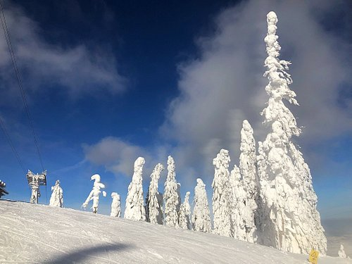 Trees loaded with snow in the Postavaru Massif!