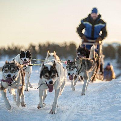 Dog Sledding near Tromso.