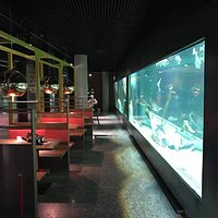 We have a 18m long saltwater aquarium in the middle of the restaurant