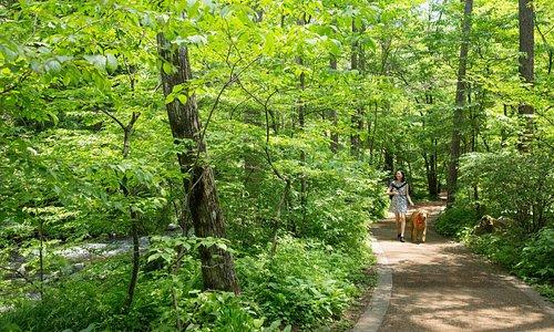 施設をつなぐ川沿いの遊歩道を散策するのも星野エリアの楽しみのひとつ。