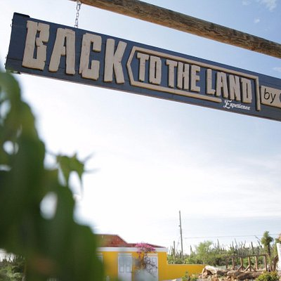 Welcome to Back to The Land, Experience!