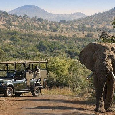 Kruger National Park Open Vehicle Safari