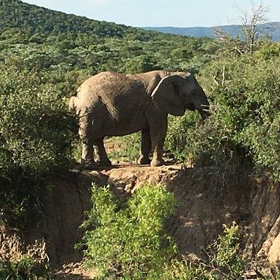 Se det kæmpe store dyr på så nært hold vau