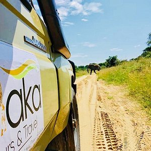 Elephant crossing moment during a Game drive