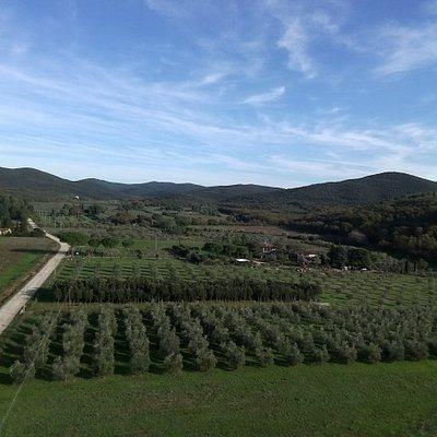 Azienda Agricola Micol Carraro