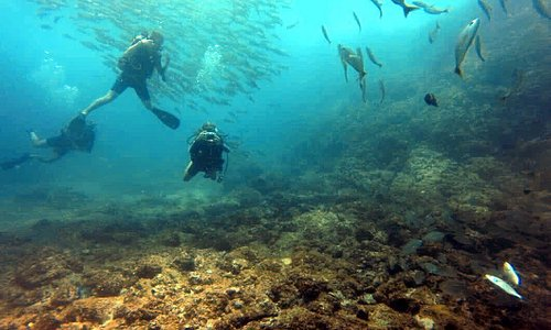 Diving at Las Catalinas Islands, surrounded by fish!