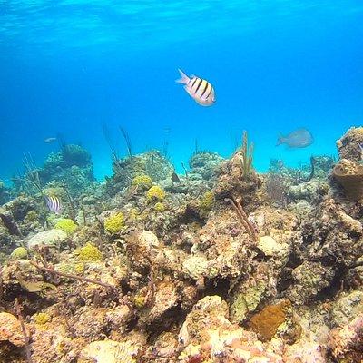 Athol Island reef