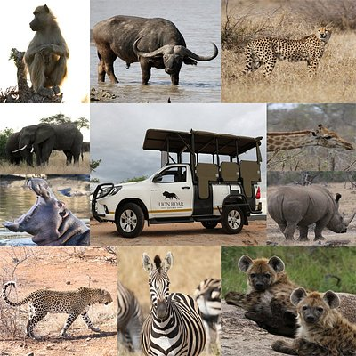 Lion Roar Safaris, Nelspruit, Kruger National Park