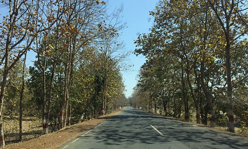 Road that takes you in the heart of Madhya Pradesh on route to Pachmarhi
