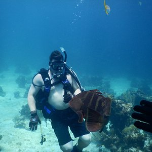 diving with nassau grouper