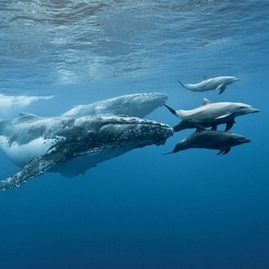 Whales and dolphins under the surface