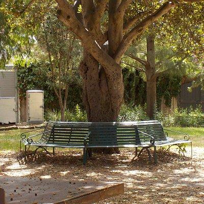 Seating around tree