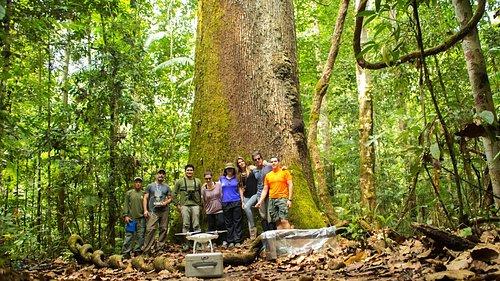 Na maior árvore do Parque