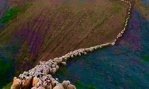 """""""Settembre, andiamo. È tempo di migrare. Ora in terra d'Abruzzi i miei pastori lascian gli stazzi e vanno verso il mare: scendono all'Adriatico selvaggio che verde è come i pascoli dei monti"""". Così recita I pastori di Gabriele D'Annunzio, illustre poeta di Pescara profondamente legato alla sua terra.  L'indizio è chiaro: pastorizia in Abruzzo fa rima con transumanza.   Buona passeggiata a tutti....😍"""